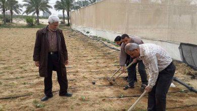 Photo of مديرية زراعة خانيونس تنظم يوما تطوعياً لزراعة وتطوير محطة التجارب