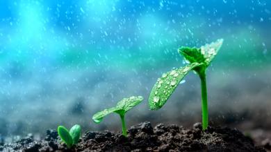 Photo of الزراعة: نسبة هطول الأمطار لمناطق قطاع غزة بلغت 84%