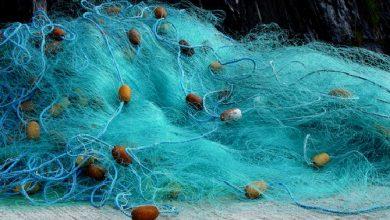 Photo of الزراعة تمنع استخدام الشباك الضيقة في الصيد