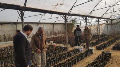 Photo of زراعة شمال غزة تتابع مرحلة تطعيم اللوزيات في عدد من المشاتل