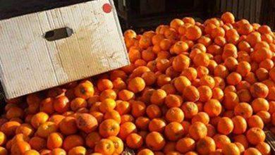 Photo of الزراعة تتلف حمضيات وبيض فاسد