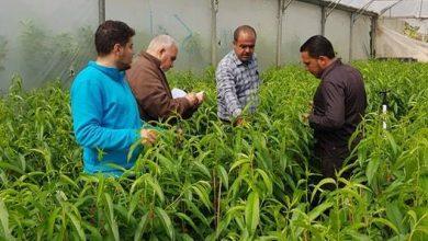 Photo of بالصور… زراعة شمال غزة تتابع مراحل تطور اشتال اللوزيات المطعمة