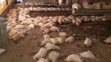 Photo of الزراعة : الأضرار الزراعية للمرتفع الجوي بلغت نصف مليون دولار