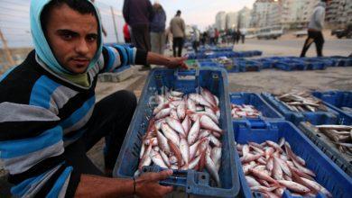 Photo of الزراعة والاقتصاد توضحان عملية تسويق الأسماك للخارج