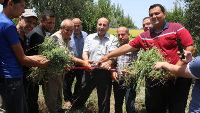 Photo of الزراعة تنظم جولة لمزارع الزعتر شمال قطاع غزة