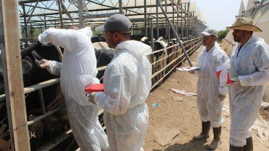 Photo of بالصور.. الزراعة تطمئن المواطنين على موسم الأضاحي