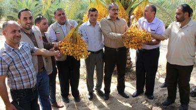 "Photo of ""الزراعة"" و""الرحمة"" تشهدان حصاد البلح البرحي"
