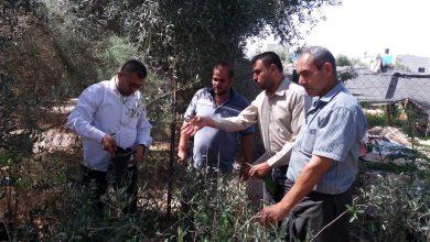 Photo of وقاية النبات تنفذ أنشطة إرشادية وتوعوية للمزارعين