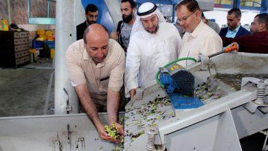 Photo of لأول مرة : تحقيق اكتفاء ذاتي في إنتاج زيت الزيتون وصل 100٪