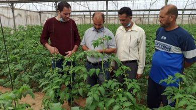 Photo of زراعة رفح تنظم جولة ميدانية على مزارعي الخضار