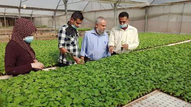 Photo of زراعة رفح تنظم جولات ميدانية على مشاتل الخضار