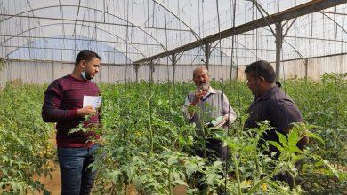 Photo of زراعة خانيونس تتابع مزارعي دفيئات البندورة