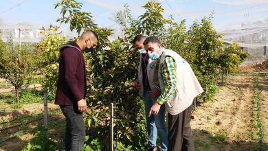 Photo of زراعة غزة تنظم جولات ميدانية على مزارعي الخضار والبستنة الشجرية