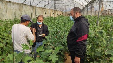 Photo of زراعة خانيونس تتابع شكاوي المزارعين في محاصيل الخضار