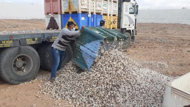 "Photo of الزراعة تتلف 12 طن ""ثومة"" غير صالحة للاستخدام الآدمي"