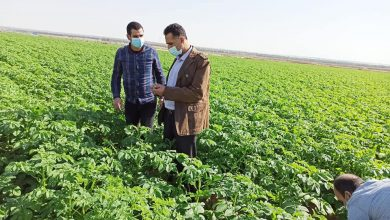 Photo of زراعة رفح تنظم جولة ميدانية على مزارعي الخضار في المحافظة