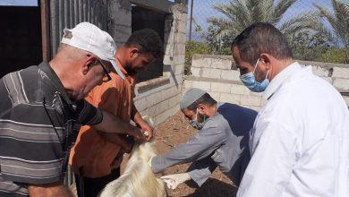 Photo of الخدمات البيطرية في رفح تواصل تقديم خدماتها لمربي الثروة الحيوانية وتحديث بيانتهم