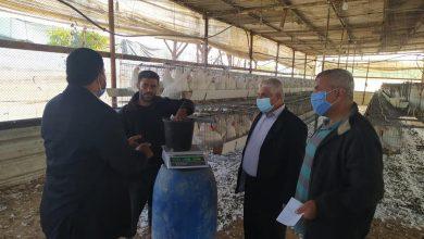 Photo of زراعة خانيونس تتفقد مزارع الدجاج البياض في منطقة المواصي
