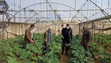 "Photo of زراعة رفح تنظم جولات ميدانية على مزارعي الخضار في منطقة""الشوكة"""