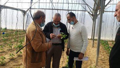 Photo of زراعة خانيونس تواصل زياراتها الميدانية لمزارعي الخضار