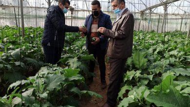 Photo of بالصور … زراعة رفح تنظم جولات ميدانية على مزارعي الخضار في المحافظة