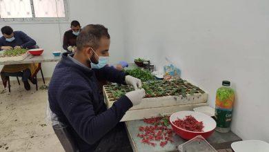 Photo of الزراعة تتفقد مشاتل تطعيم الخضار في شمال غزة