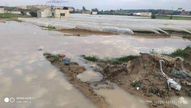 Photo of صور.. الزراعة توجه نداءً عاجلاً لشركاءها لإغاثة المزارعين المتضررين شمال القطاع