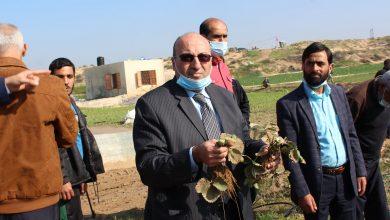 Photo of خلال جولة على المزارعين >>  بالصور…الزراعة: أضرار المنخفض شمال القطاع (مليون دولار)