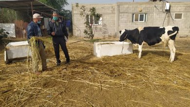 Photo of زراعة الوسطى تنظم جولة ميدانية على مربي الأبقار والأغنام في المناطق الحدودية
