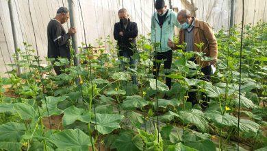 Photo of زراعة خانيونس تواصل زياراتها الميدانية لمزارعي البستنة الشجرية والخضار