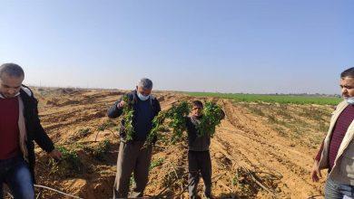 Photo of زراعة رفح تستجيب لنداء المزارعين وتقوم بتفقد وحصر الأضرار الزراعية