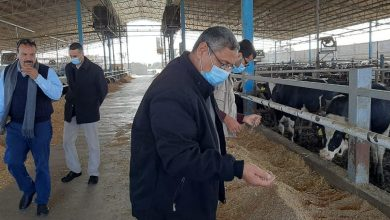 Photo of الزراعة : جهود كبيرة للرقابة علي مستودعات الأعلاف بالقطاع