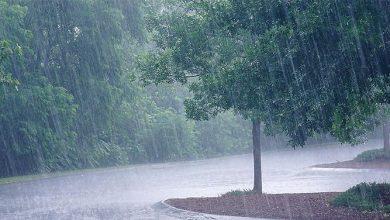 Photo of الزراعة: النسبة المئوية لهطول الأمطار بلغت  61.9% من المعدل العام لكافة المحافظات