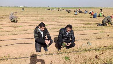 Photo of زراعة رفح تتفقد مزارعي البصل في المناطق الشرقية للمحافظة
