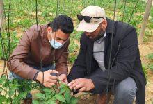 Photo of زراعة الوسطى تنفذ جولة ميدانية على مزارعي الخضار داخل الدفيئات