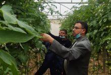 Photo of بالصور…زراعة خانيونس تتابع ميدانياً مشاهدات الأصناف الجديدة لمزارعي الخضار