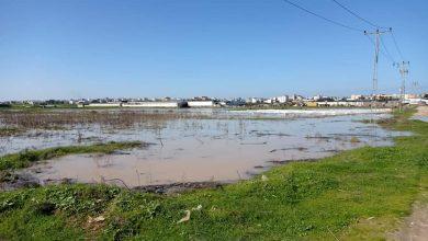 Photo of الزراعة: الاحتلال أغرق 310 دونمات بالكامل وتضرر 127 أخرى