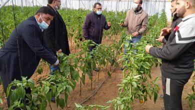 Photo of زراعة خانيونس تتابع المشاكل التي تواجه مزارعي الخضار في المحافظة