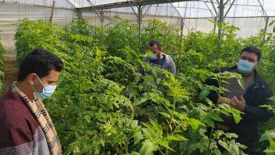 """Photo of زراعة الوسطى تتفقد مزارعي الخضار في منطقتي""""دير البلح"""" و""""الزوايدة"""""""