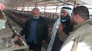 Photo of زراعة رفح تتفقد مزارع الدجاج النموذجية التي تعتمد نظام التربية داخل الأقفاص