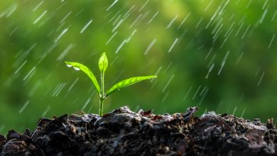 Photo of الزراعة : كميات الأمطار على القطاع بلغت ( 192ملم)