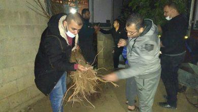 Photo of بالصور..الزراعه تواصل فحص  الأشتال الزراعية الواردة الي القطاع
