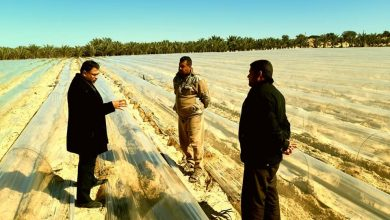 "Photo of زراعة خانيونس تتفقد مزارعي البطيخ ""العروة المبكرة"""