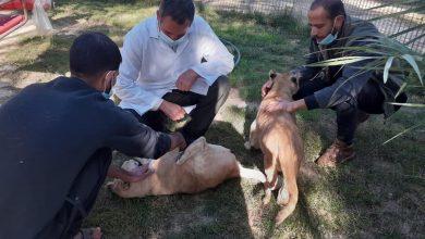 Photo of الزراعة تنفذ زيارة تفقدية لحديقة الحيوان في مدينة رفح