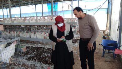 Photo of بيطرة خانيونس تتفقد مزارع الدجاج البياض واللاحم وتشرع بتحديث البيانات الاحصائية