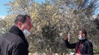 Photo of زراعة خانيونس تتفقد مزارعي الزيتون و تقدم الارشادات اللازمة