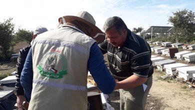 Photo of الزراعة تنفذ جولة ميدانية على المناحل بمحافظة الشمال