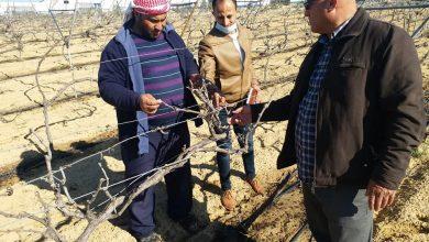 Photo of زراعة خانيونس تنفذ جولة ميدانية على مزارعي العنب