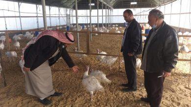 Photo of زراعة رفح تنفذ جولة إرشادية لمزارع الحبش و تسمين العجول