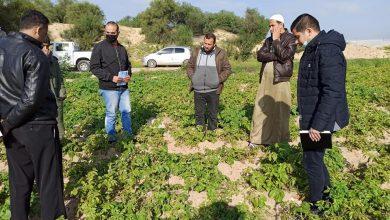 Photo of زراعة رفح تواصل جولاتها الميدانية على مزارعي الخضار في المحافظة